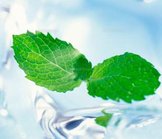 池袋メンズエステ|Aroma Mint〜アロマミント|セラピスト求人情報